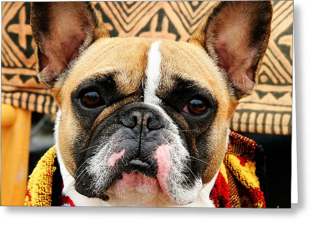 Boston Terrier Greeting Cards Greeting Cards - Paul Ryan - Boston Terrier Portrait Greeting Card by Tap On Photo