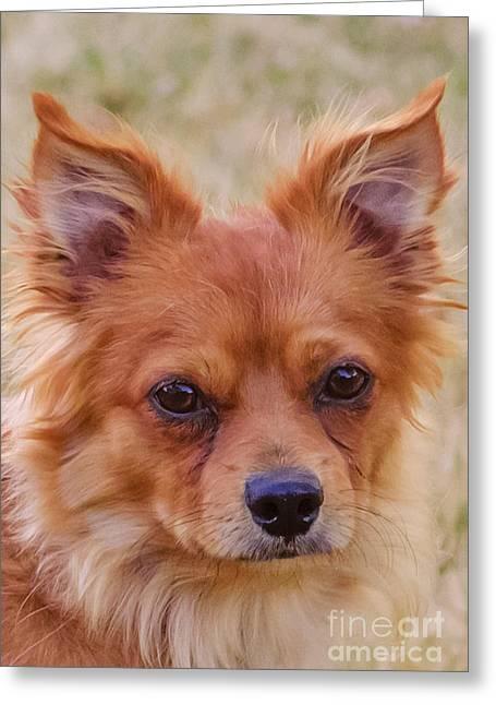 Pound Puppies Greeting Cards - Paulanka Greeting Card by Deborah Smolinske