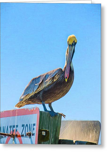 Seabirds Greeting Cards - Paulie the Pelican Greeting Card by John Bailey