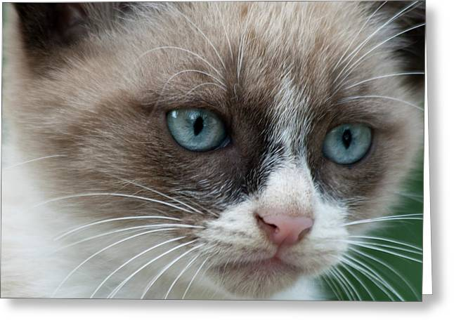 Biologic Greeting Cards - Pauls little cat Greeting Card by Heiko Koehrer-Wagner