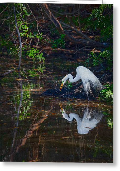 Great Egret Greeting Cards - Pause for Reflection Greeting Card by Rob Travis