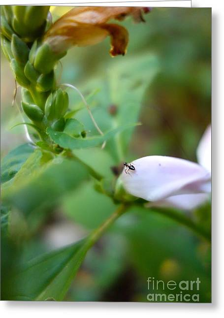 Pixy Greeting Cards - Paused On The Petal Greeting Card by Jacqueline Athmann