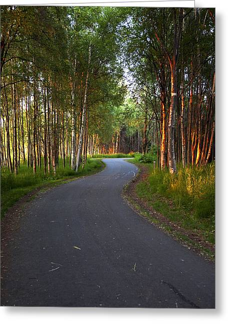 Tony Knowles Coastal Trail Greeting Cards - Paved Path Winding Through The Forest Greeting Card by Michael Criss