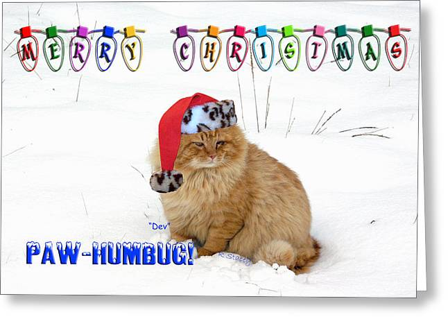 Paws4critters Photography Greeting Cards - Paw Humbug Greeting Card by Robyn Stacey