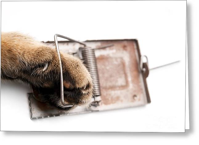 Clever Greeting Cards - Paw in mousetrap Greeting Card by Sinisa Botas