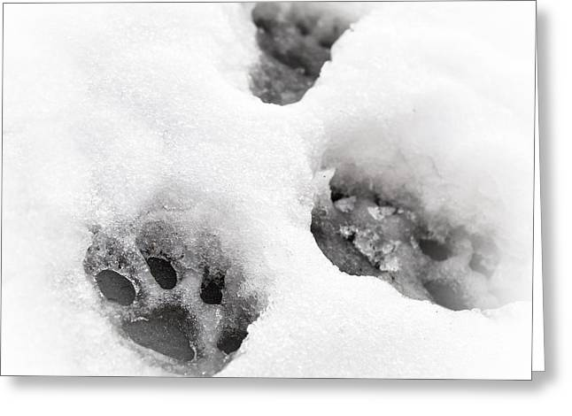 Animal Paw Print Greeting Cards - Paw print  Greeting Card by Tom Gowanlock