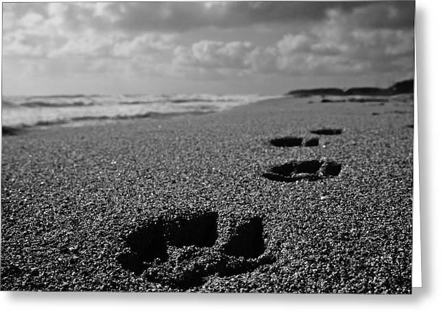 Paw Prints in the Sand Greeting Card by Tracey McQuain