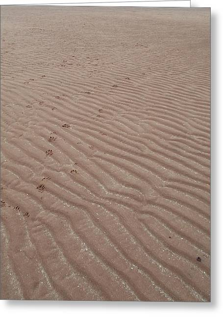 Ripples In The Sand Greeting Cards - Pawprints Greeting Card by Dean Stoker