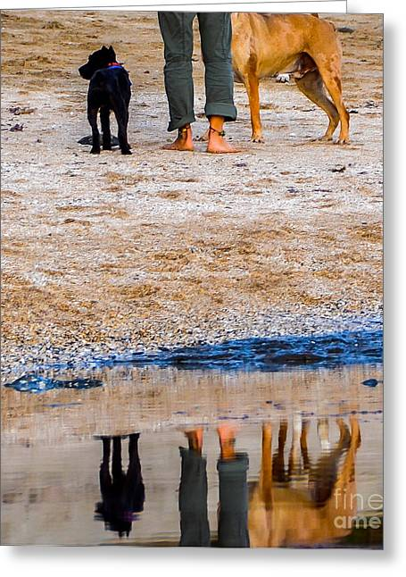 Half Moon Bay Greeting Cards - Paws and Reflect Greeting Card by Amy Fearn