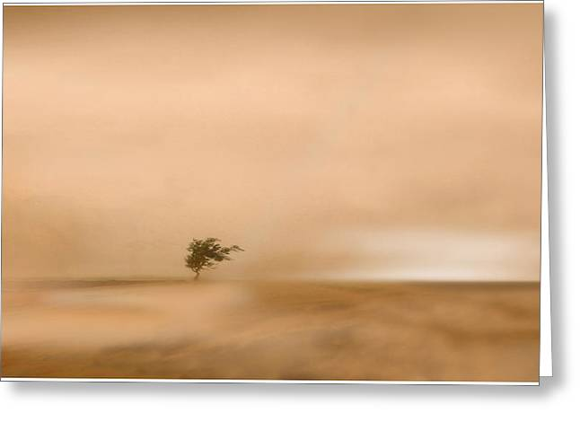 Surreal Landscape Drawings Greeting Cards - Pawsons Garden Greeting Card by Craig Carl
