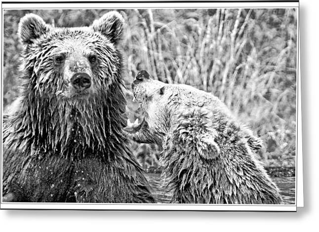 Growling Greeting Cards - Pay Attention Greeting Card by Geraldine Scull