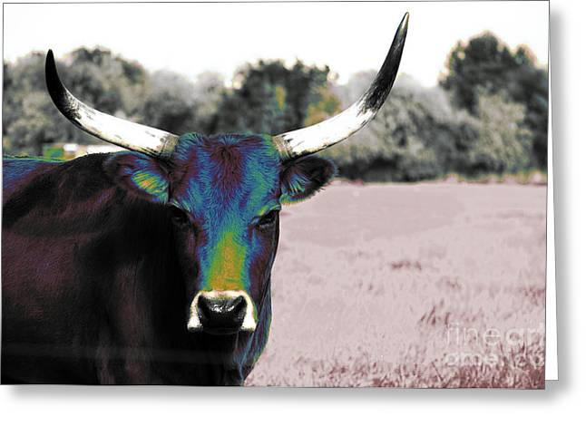 Steer Greeting Cards - Pazzo Greeting Card by Molly McPherson