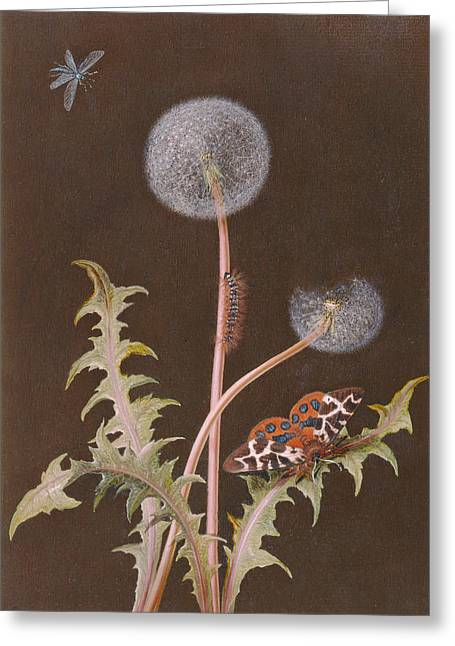 Botanical Greeting Cards - Pd.380-1973 Dandelion With Insects Greeting Card by Margaretha Barbara Dietzsch