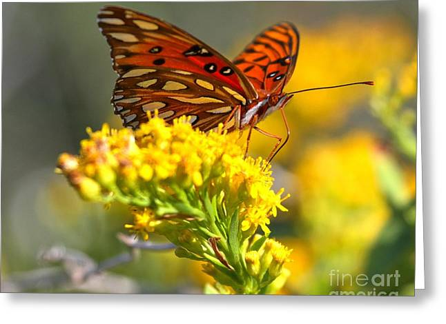 Buterfly Greeting Cards - Pea Island Butterfly Greeting Card by Adam Jewell