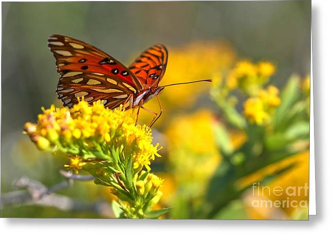 Buterfly Greeting Cards - Pea Island Gulf Fritillary Greeting Card by Adam Jewell
