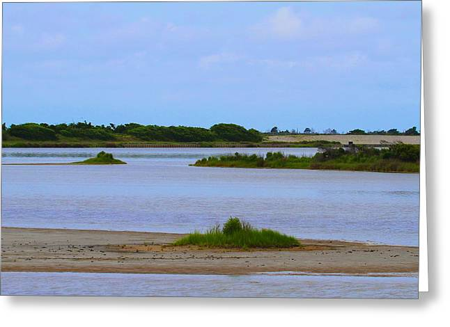 Rodanthe Greeting Cards - Pea Island National Wildlife Refuge 15 Greeting Card by Cathy Lindsey