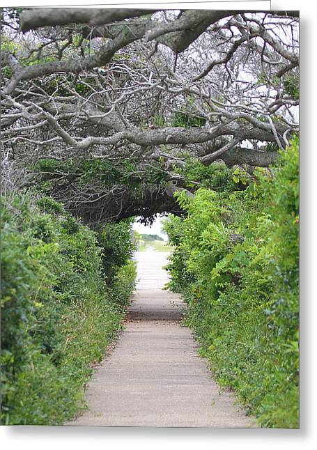 Rodanthe Greeting Cards - Pea Island Tree Tunnel Greeting Card by Cathy Lindsey