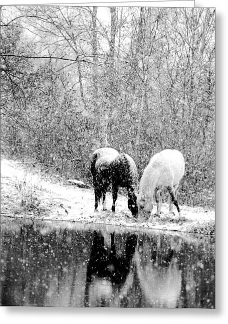 Grazing Snow Greeting Cards - Peace and Joy Greeting Card by Leslie Heemsbergen
