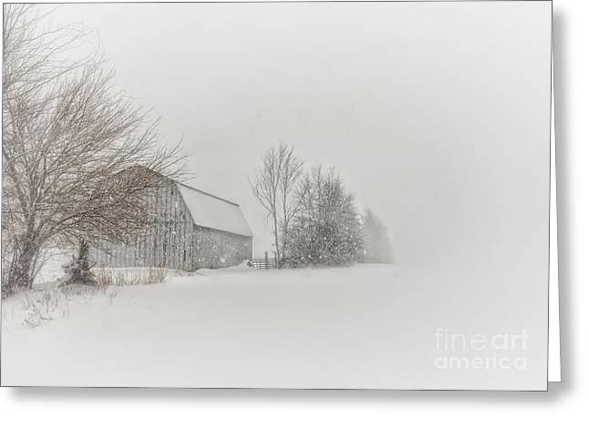 Winter Storm Greeting Cards - Peace and Quiet Greeting Card by Pamela Baker