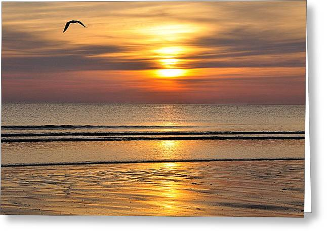 South Boston Prints Greeting Cards - Peace Greeting Card by Joanne Brown