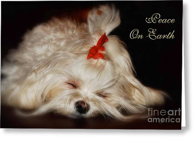 Sleeping Maltese Greeting Cards - Peace On Earth Greeting Card by Lois Bryan