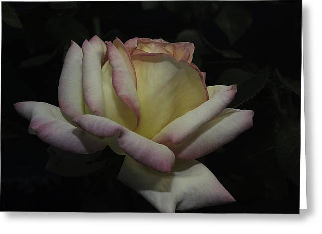 Lucinda Walter Greeting Cards - Peace to You and Yours Greeting Card by Lucinda Walter
