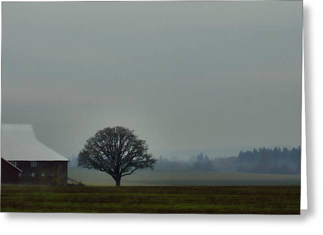 Farmers Field Greeting Cards - Peaceful Country Morning Greeting Card by Don Schwartz