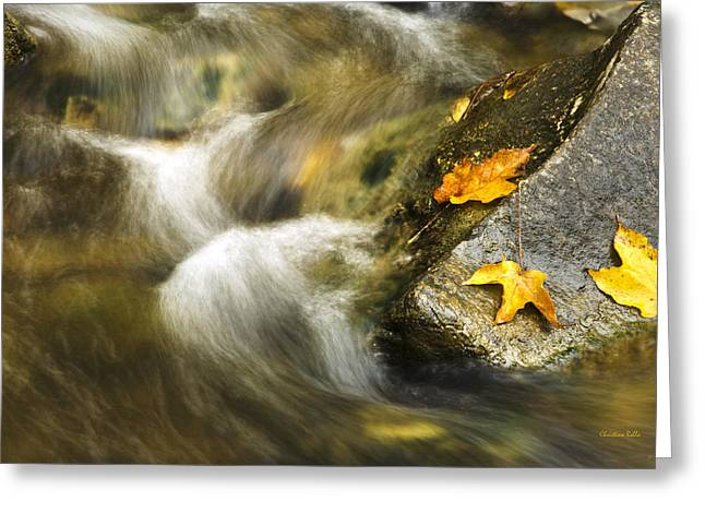 Fall Colors Greeting Cards - Peaceful Creek Greeting Card by Christina Rollo