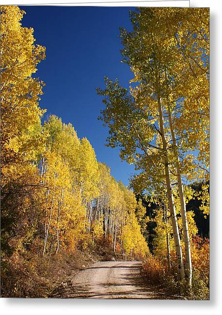 Fall Greeting Cards - Peaceful Fall Road Greeting Card by Michael J Bauer