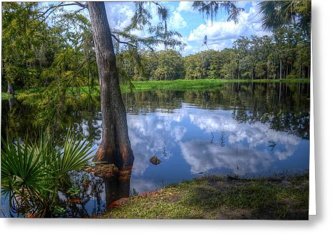 Stream Digital Greeting Cards - Peaceful Florida Greeting Card by Timothy Lowry