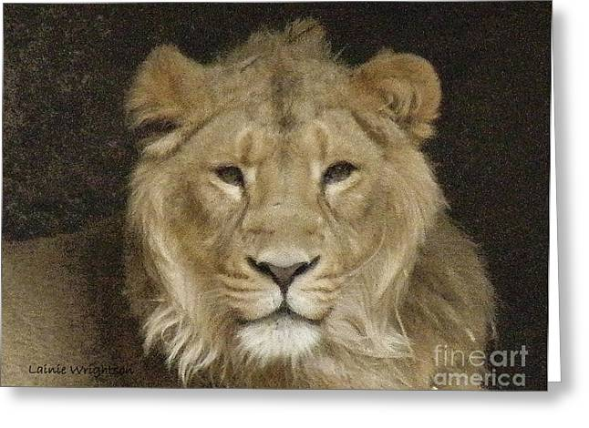 Lainie Wrightson Greeting Cards - Peaceful Lion Greeting Card by Lainie Wrightson