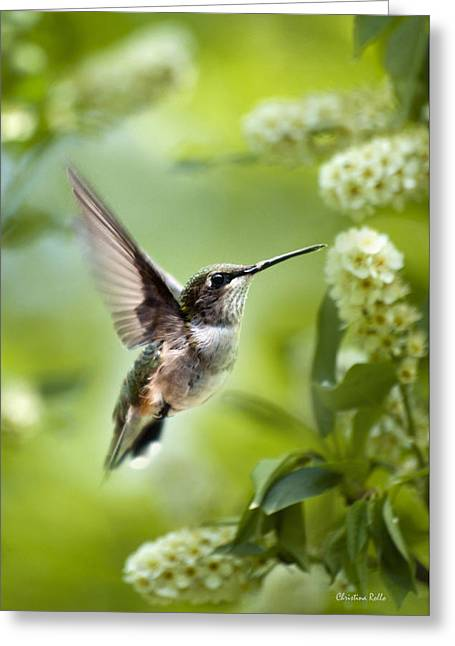 Hovering Greeting Cards - Peaceful Love Hummingbird Greeting Card by Christina Rollo