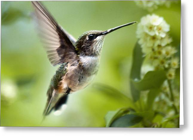 Hovering Greeting Cards - Peaceful Love Hummingbird Square Greeting Card by Christina Rollo