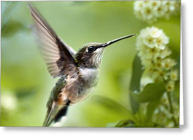 Recently Sold -  - Hovering Greeting Cards - Peaceful Love Hummingbird Square Greeting Card by Christina Rollo
