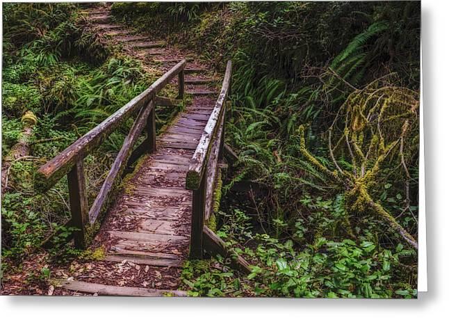 Peaceful Path Greeting Card by Loree Johnson