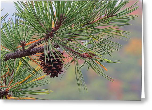 Peaceful Pinecone Greeting Card by Stephen Melcher