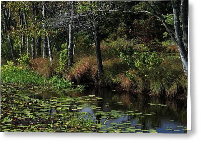 Peaceful Pond Greeting Card by Karol Livote