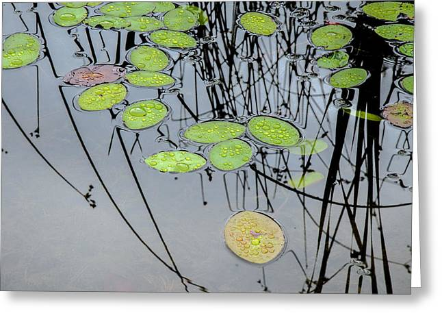 Beneath The Surface Greeting Cards - Peaceful Reflections 2 Greeting Card by Roxy Hurtubise