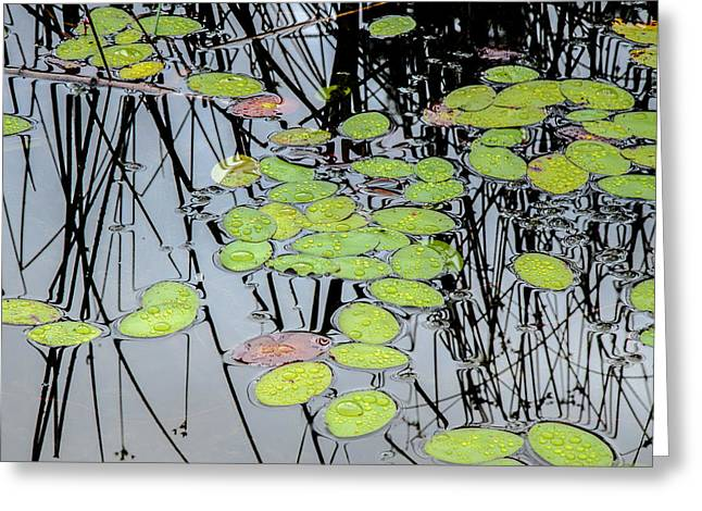 Beneath The Surface Greeting Cards - Peaceful Reflections 3 Greeting Card by Roxy Hurtubise