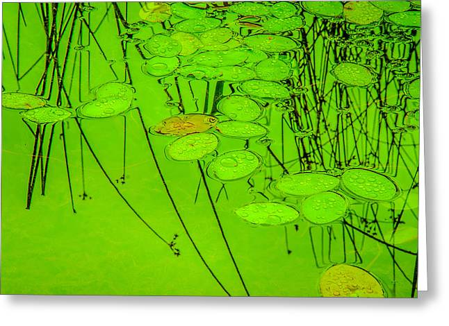 Beneath The Surface Greeting Cards - Peaceful Reflections 4 Greeting Card by Roxy Hurtubise