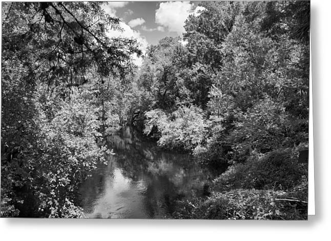 Hillsborough River Greeting Cards - Peaceful River Greeting Card by Carolyn Marshall