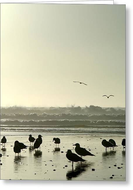 Us1 Greeting Cards - Peaceful Seagulls Greeting Card by Marcelo J Benevides