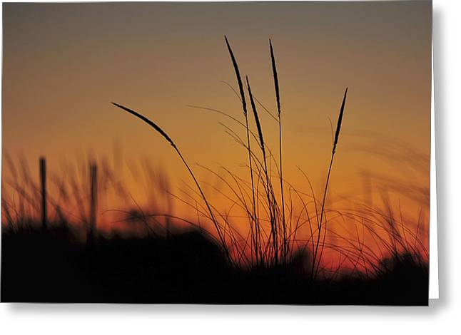 Wedding Shower Greeting Cards - Peaceful Sunset Greeting Card by Terry DeLuco