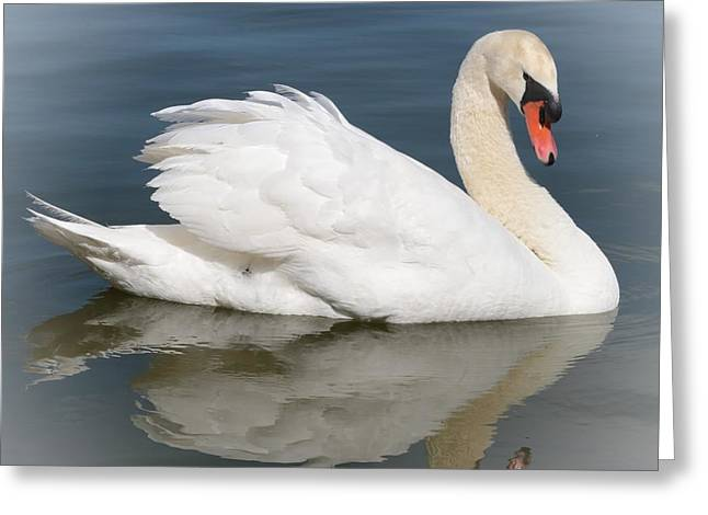 Peaceful Swan Greeting Card by Carol Groenen