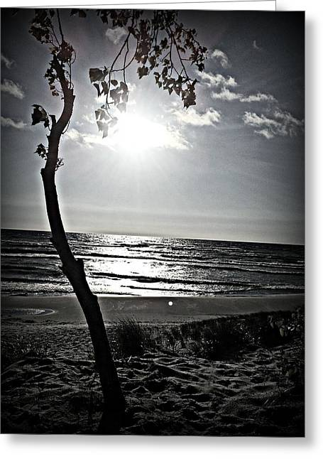 Recently Sold -  - Beach Greeting Cards - Peaceful Tree Greeting Card by Dawdy Imagery