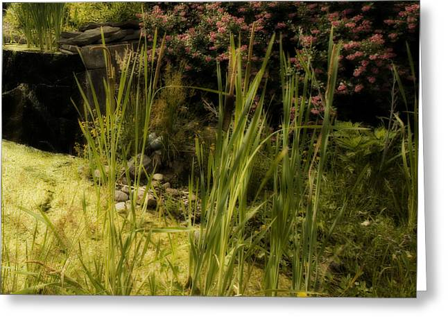 Water Garden Greeting Cards - Peaceful Water Garden Greeting Card by Bonnie Bruno