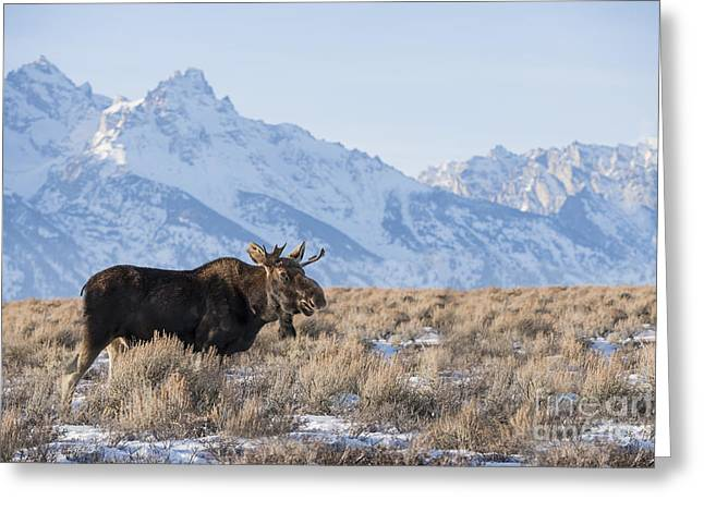 North American Wildlife Photographs Greeting Cards - Peaceful Winter Afternoon Greeting Card by Sandra Bronstein