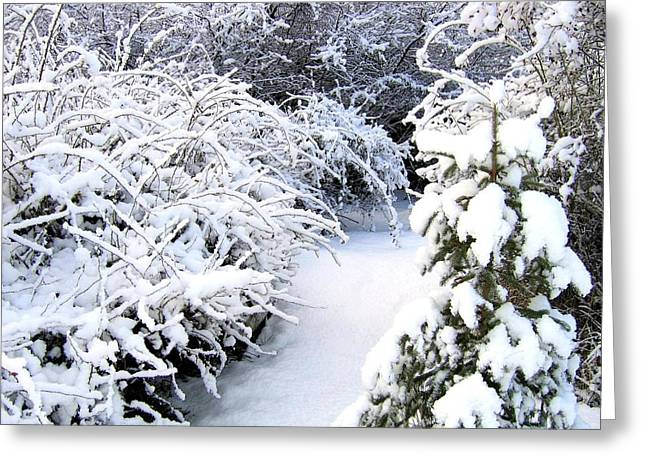 Peaceful Winter Path Greeting Card by Will Borden