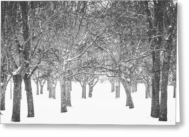 Peaceful Winter Scene  Greeting Card by Aldona Pivoriene