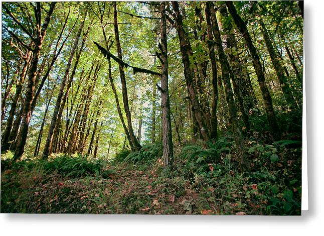 Serene Setting Greeting Cards - Peaceful Woods Greeting Card by Bonnie Bruno